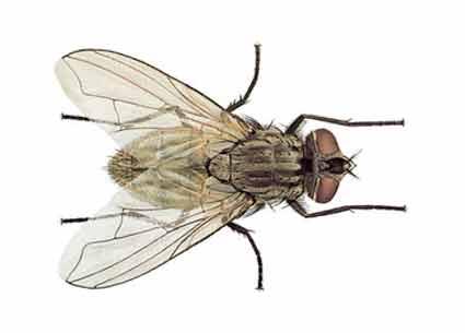 Como matar y ahuyentar a una mosca taringa - Como espantar moscas ...